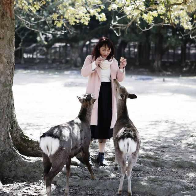 5 Tempat Untuk Melihat Keindahan Satwa Jepang