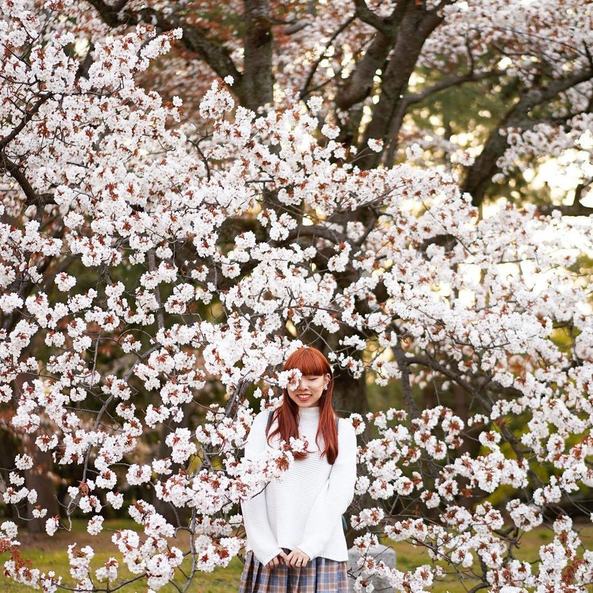 Woman surrounded by sakura