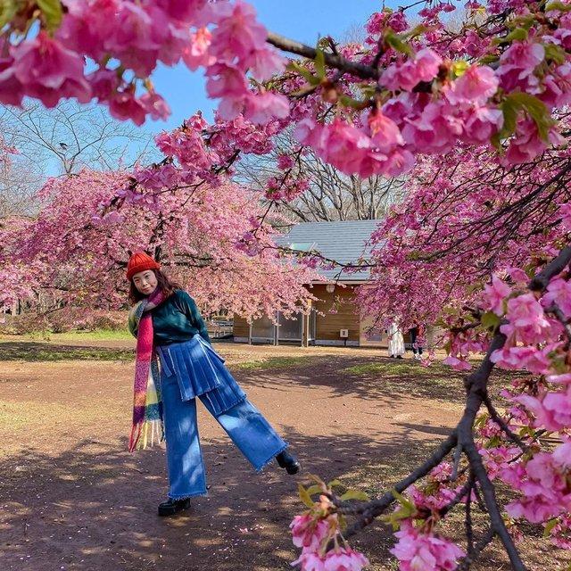 5 Tips Untuk Menikmati Hanami Di Jepang
